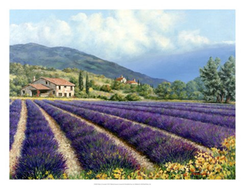 Framed Fields Of Lavender Print