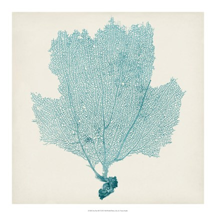 Framed Sea Fan III Print