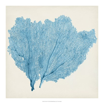 Framed Sea Fan IV Print