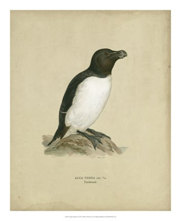Framed Antique Penguin I Print