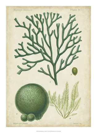 Framed Seaweed Specimen in Green IV Print