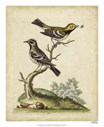 Framed Edwards Bird Pairs VIII Print
