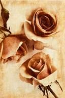 Orange Rose II  Fine Art Print