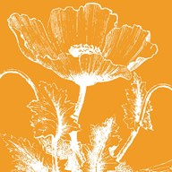Poppy VII  Fine Art Print