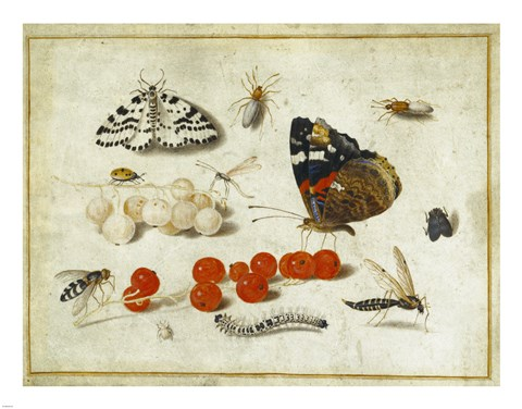 Framed Butterflies, Insects, and Currants Print