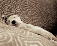 Dog Tired  Fine Art Print