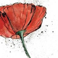 Not a California Poppy I on White  Fine Art Print