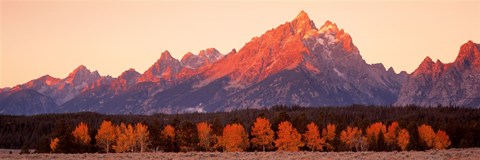 Framed Aspens, Teton Range, Grand Teton National Park, Wyoming, USA Print
