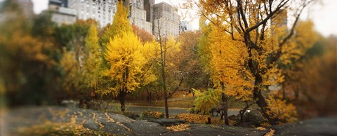 Framed Autumn trees in a park, Central Park, Manhattan, New York City, New York State, USA Print
