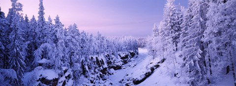 Framed Snow covered trees in a forest, Imatra, Finland Print