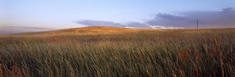 Framed Tall grass in a field, High Plains, Cheyenne, Wyoming, USA Print
