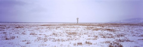 Framed Snow covered landscape in winter, Antelope Flat, Grand Teton National Park, Wyoming, USA Print