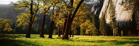 Framed Trees near the El Capitan, Yosemite National Park, California, USA Print