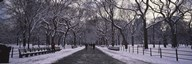 Bare trees in a park, Central Park, New York City, New York State, USA  Fine Art Print