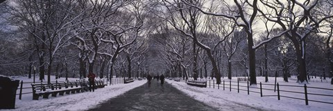Framed Bare trees in a park, Central Park, New York City, New York State, USA Print