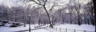 Bare trees during winter in a park, Central Park, Manhattan, New York City, New York State, USA Art