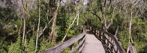 Framed Boardwalk passing through a forest, Lettuce Lake Park, Tampa, Hillsborough County, Florida, USA Print