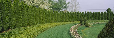 Framed Row of arbor vitae trees in a garden, Ladew Topiary Gardens, Monkton, Baltimore County, Maryland, USA Print
