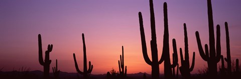 Framed Purple Sky Behind Cacti in the Saguaro National Park, Arizona Print