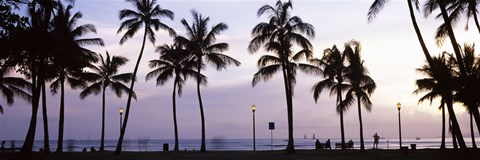 Framed Palm trees on the beach, Waikiki, Honolulu, Oahu, Hawaii (black and white) Print