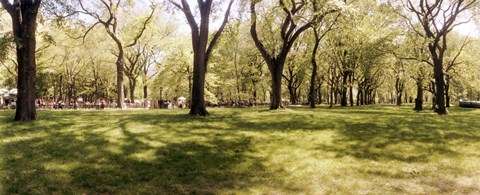 Framed Trees and grass in a Central Park in the spring time, New York City, New York State, USA Print