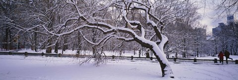 Framed Trees covered with snow in a park, Central Park, New York City, New York state, USA Print