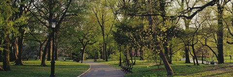 Framed Trees In A Park, Central Park, NYC, New York City, New York State, USA Print