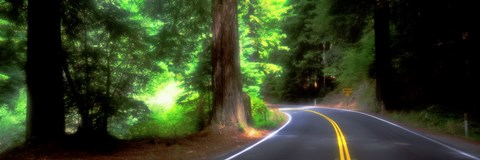 Framed Road, Redwoods, Mendocino County, California, USA Print