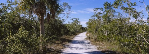 Framed Dirt road passing through a forest, Indigo Trail, J.N. Ding Darling National Wildlife Refuge, Sanibel Island, Florida, USA Print