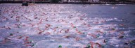 Triathlon athletes swimming in water in a race, Ironman, Kailua Kona, Hawaii, USA  Fine Art Print