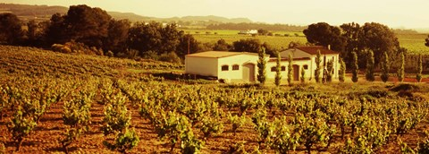 Framed Farmhouses in a vineyard, Penedes, Catalonia, Spain Print