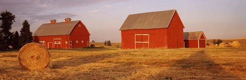 Framed Red barns in a farm, Palouse, Whitman County, Washington State, USA Print