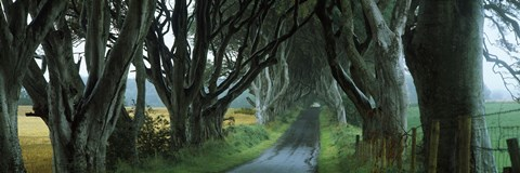 Framed Road at the Dark Hedges, Armoy, County Antrim, Northern Ireland Print