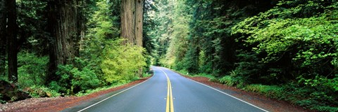 Framed Road passing through a forest, Prairie Creek Redwoods State Park, California, USA Print