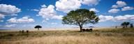 Elephants, Kenya, Africa  Fine Art Print