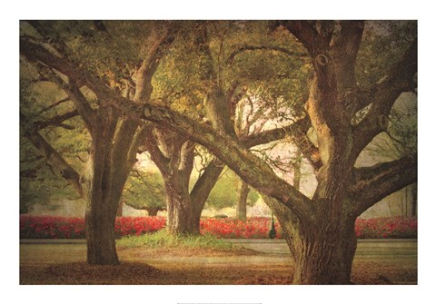 Framed Three Oaks and Azaleas Print