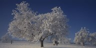 Two people horseback riding through cherry trees on a snow covered landscape, Aargau, Switzerland Art