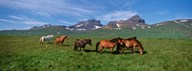Horses Standing And Grazing In A Meadow, Borgarfjordur, Iceland Art