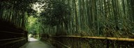 Road passing through a bamboo forest, Arashiyama, Kyoto Prefecture, Kinki Region, Honshu, Japan  Fine Art Print