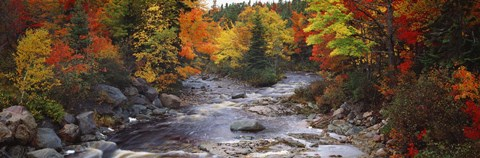 Framed Stream with trees in a forest in autumn, Nova Scotia, Canada Print