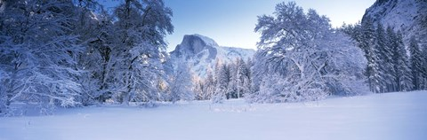 Framed Oak trees and rock formations covered with snow, Half Dome, Yosemite National Park, California Print