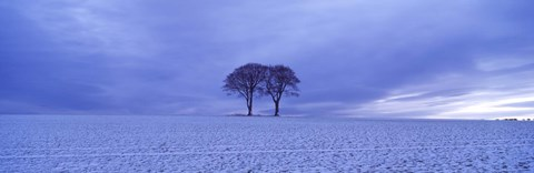 Framed Twin trees in a snow covered landscape, Warter Wold, Warter, East Yorkshire, England Print