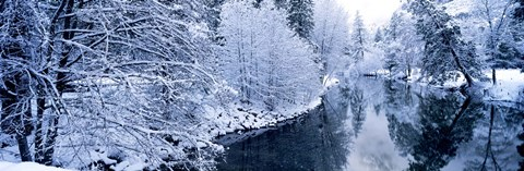 Framed Snow covered trees along a river, Yosemite National Park, California, USA Print