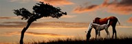 Horse mare and a foal grazing by tree at sunset Art
