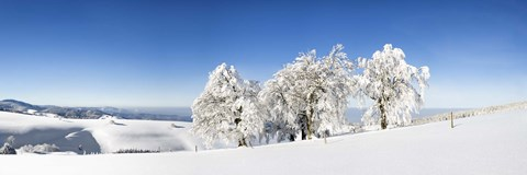 Framed Snow covered trees, Schauinsland, Black Forest, Baden-Wurttemberg, Germany Print