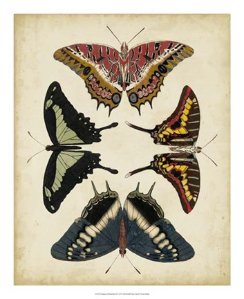 Framed Display of Butterflies II Print