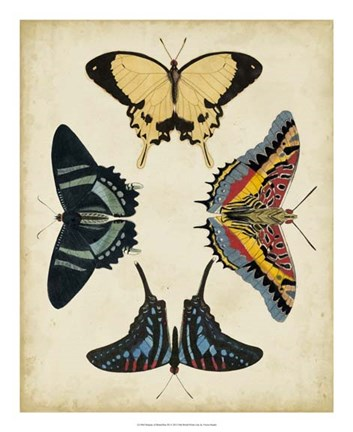 Framed Display of Butterflies III Print
