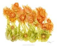 Sunlit Poppies I  Fine Art Print