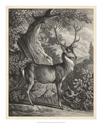 Framed Woodland Deer I Print