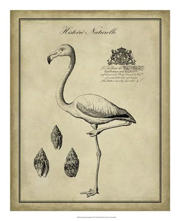 Framed Antiquarian Flamingo Print